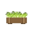 Plants In A Wooden Crate vector image vector image