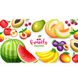 banner with different tropical fruits isolated on vector image