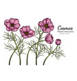 pink cosmos flower and leaf drawing with line art vector image vector image