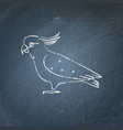 cockatoo parrot icon sketch on chalkboard vector image vector image