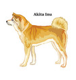 colored decorative standing portrait akita inu vector image vector image