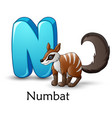 letter n is for numbat cartoon alphabet vector image
