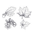 maple leaf and autumnal acorn hanging set vector image vector image