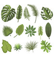 set leaves tropical plants collection of vector image vector image