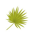 bright green leaf of palm tree tropical or vector image