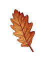 element autumn social media post vector image vector image