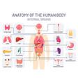 human organs system medical body anatomy man vector image
