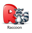letter r is for raccoon cartoon alphabet vector image