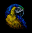 macaw parrot hand-drawn artistic portrait vector image