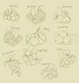 outline berries set vector image