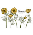yellow cosmos flower and leaf drawing with line vector image vector image