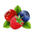 ripe berries raspberry blueberries and cherry vector image