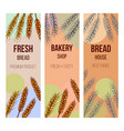 bakery label organic eco bread vector image vector image