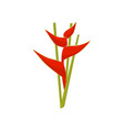 flat icon of heliconia flower beautiful vector image