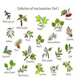 set of different tree branche vector image vector image