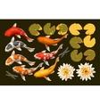 Set of koi fish and lotus vector image
