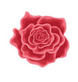 a flower of a red rose in cartoon style vector image vector image