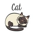 cat design animal concept flat vector image vector image