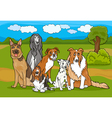 cute purebred dogs group cartoon vector image vector image