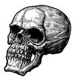 skull handmade drawing vector image vector image
