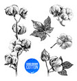 hand drawn set of cotton vector image vector image