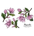 pink magnolia flower and leaf drawing with line vector image