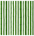 seamless background of green bamboo forest vector image vector image