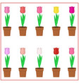 set of multi-colored tulips in pots on a white vector image vector image