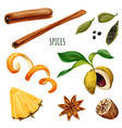 set spices including anis star and cinnamon vector image vector image