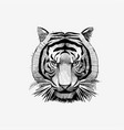tiger face drawing animal vector image