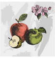 apple sketchvintage ink hand drawn of vector image
