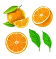 picture of orange vector image vector image