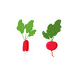 set red radish different shapes with leaves vector image vector image