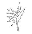 graphic strelitzia flower exotic leaves vector image
