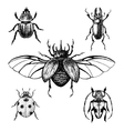 Hand drawn beetles set vector image