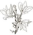 Hand Drawn Magnolia Flower Sketch vector image vector image