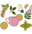 herbal tea set vector image