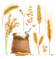 realistic agricultural crops set vector image