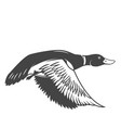 wild duck icon isolated on white background vector image vector image
