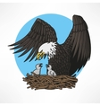 Bald eagle in the nest vector image vector image