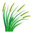 bunch of grass icon realistic style vector image