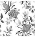watercolor australian banksia pattern vector image vector image