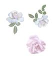 Watercolor roses elements Vintage leaves vector image