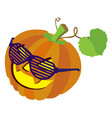 pumpkin with sunglasses and leafs isolated on vector image