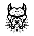 black sign dog breed pit bull terrier vector image
