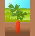 cartoon carrot vegetable in soil banner vector image