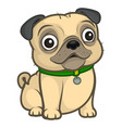 cute little pug dog in a sitting pose vector image vector image
