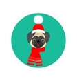 Pug with hat and scarf vector image vector image