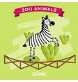 Zoo Animal Zebra vector image vector image