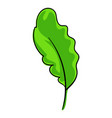 salat leaf icon cartoon style vector image vector image